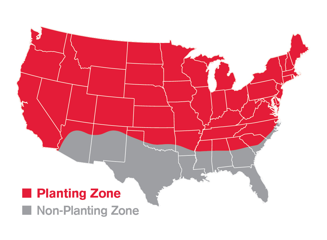 Rebels planting zone for shade mix