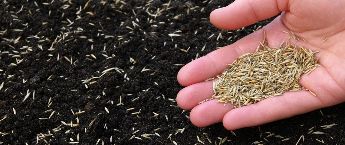 Sowing grass with seed