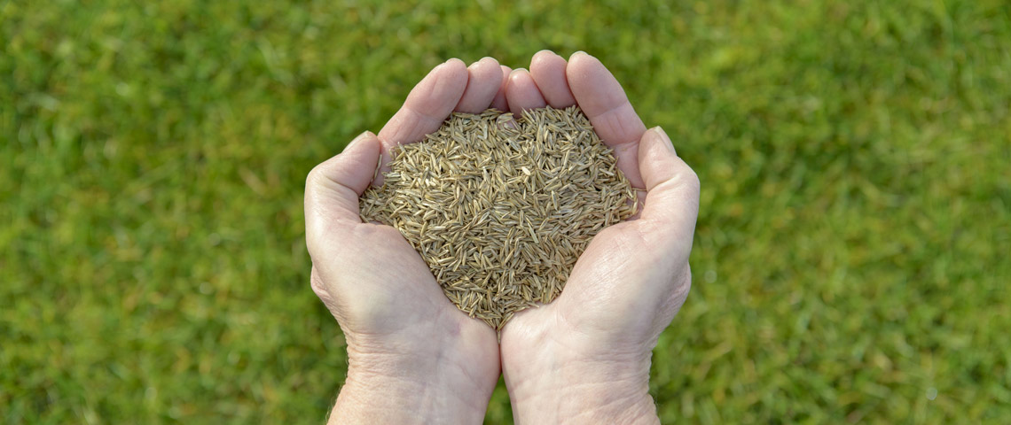 Holding grass seed
