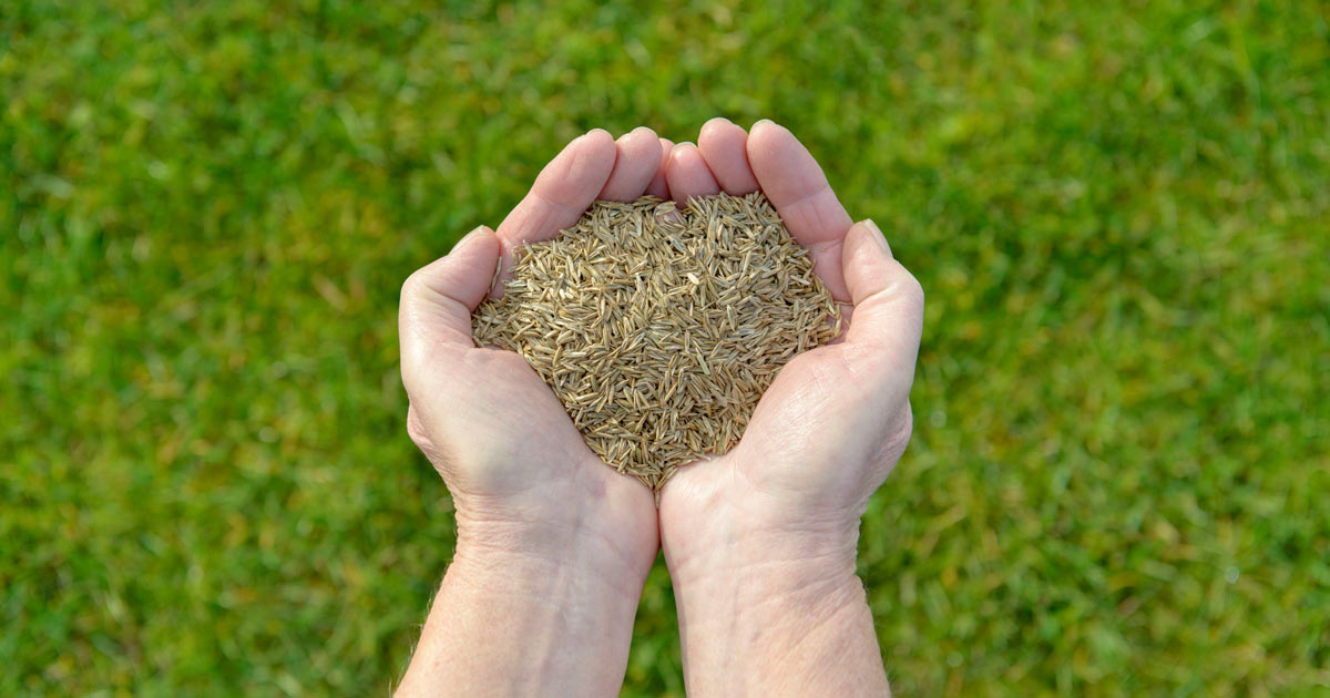 When to Plant Tall Fescue Grass Seed